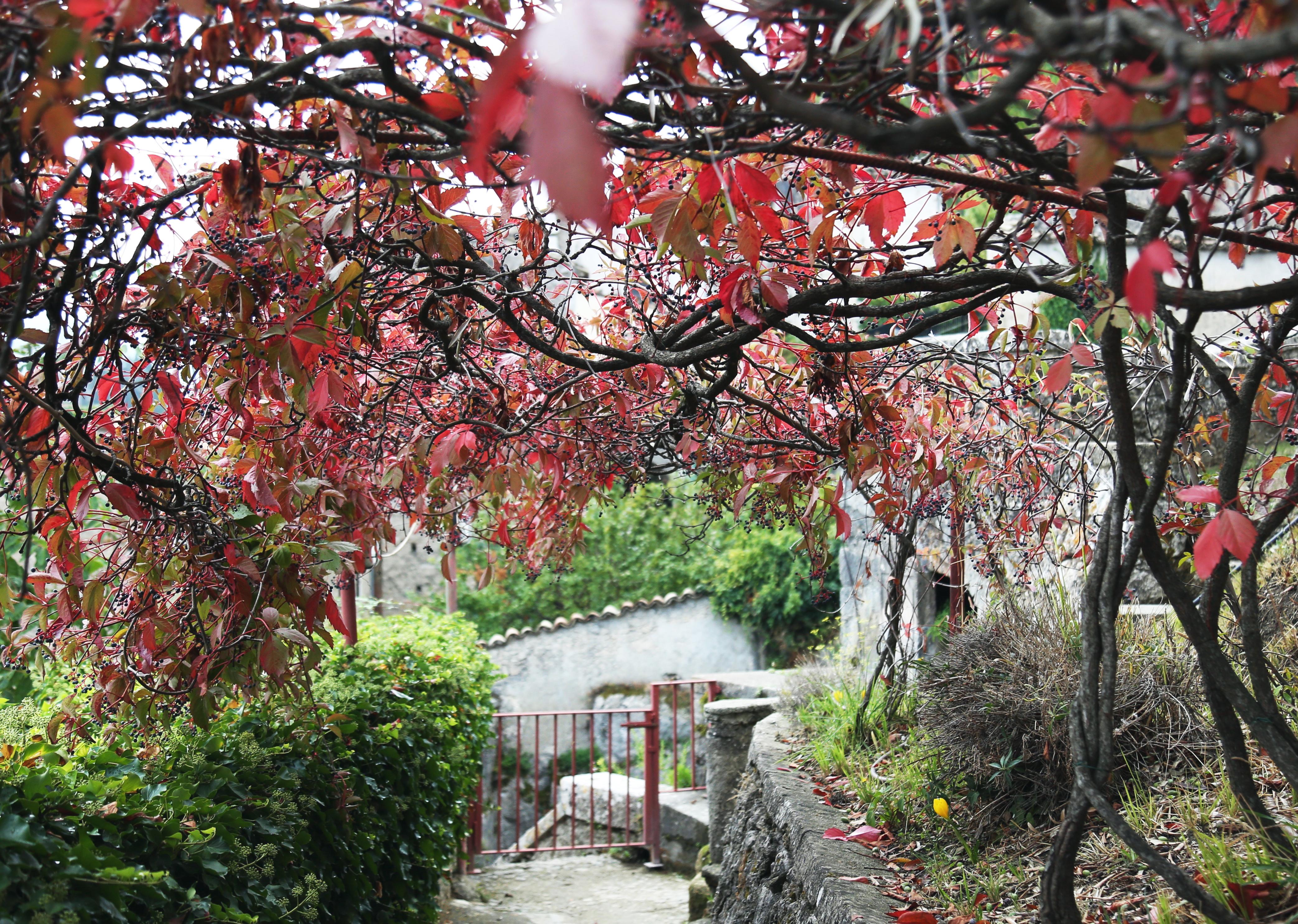 La Filanda dei Quintieri - Il sentiero che porta al ninfeo