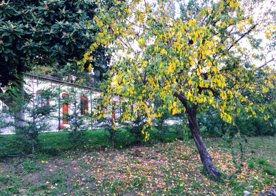 alberodautunno